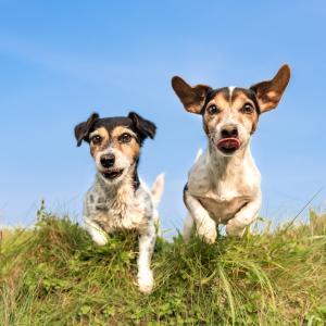 Кучетата разчитат емоционалното състояние на събратята си по опашката