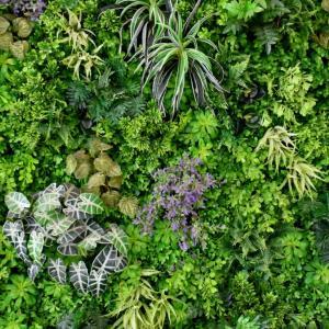 Близо 40% от 500 000 идентифицирани растения са застрашени от изчезване