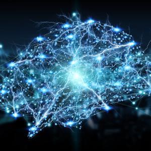 Ето къде се крие ключът към интелигентността и успеха