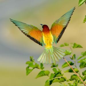 За любовта към птиците