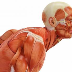 11 факта за нашето тяло, които се оказват митове