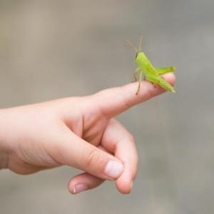 Пет насекоми, които могат да влязат в менюто ви