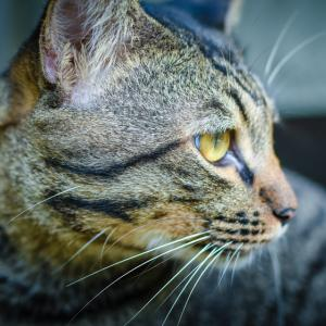 Защо котките акат на леглото и други странни поведения на домашния ви любимец