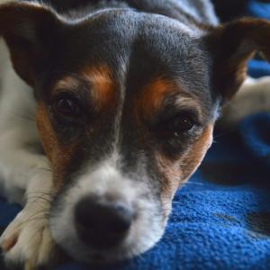Изненадващо човешкия начин, по който животните чувстват болка
