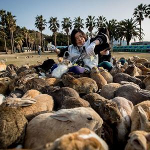 Окуношима - островът на зайците
