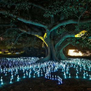 Разходка из градината на светлината в Сидни