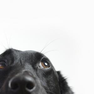 Изключително смешни кучета, заснети със скрита камера
