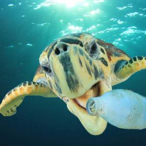 От 5 до 12 милиона тона пластмасови отпадъци попадат в световния океан всяка година