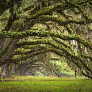 Притча за старото дърво