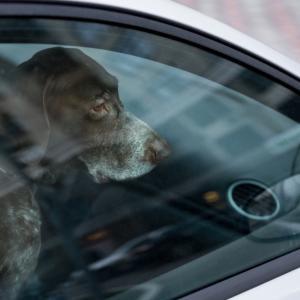 13 неща, с които застрашаваме здравето и живота на кучето си