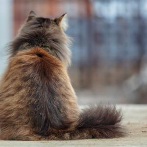 Котките си знаят името, въпреки че се преструват, че не ви разбират