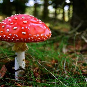 11 удивителни факта за отровните растения и гъби