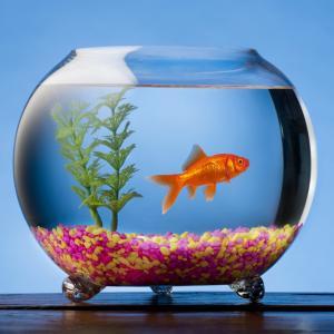 7 причини да си вземете рибки