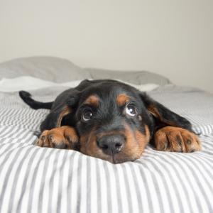 20  поспаливи кучета, които определено няма да ви оставят да си легнете в леглото тази вечер