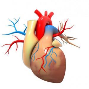 Енергийните напитки променят сърдечния ритъм