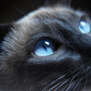 Котките използват простичките закони на физиката, за да преследват своята плячка