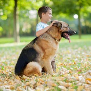 Тази трогателна история за едно куче няма да ви остави равнодушни