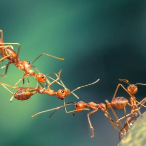 За мравките няма невъзможни неща