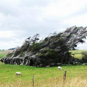 15 юни - Световен ден на вятъра