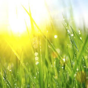 Притча за тревата