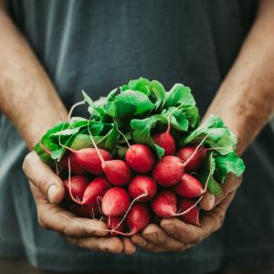 По-здравословни ли са био храните?