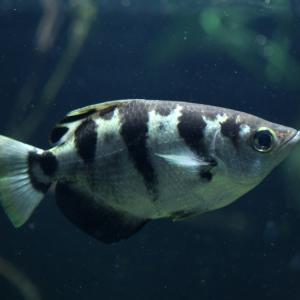 Рибите могат да различават човешки лица