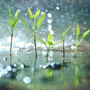 """Ново проучване показва как растенията се """"паникьосват"""", когато вали"""