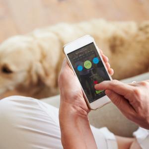 Колко опасно може да бъде за кучето пристрастяването ни към смартфона