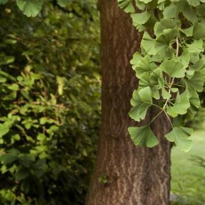 Защо в много растения има цианид?