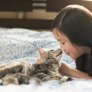 Котките се привързват към хората емоционално така, както кучетата и децата