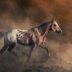 10 редки животни, които ще ви удивят с външния си вид