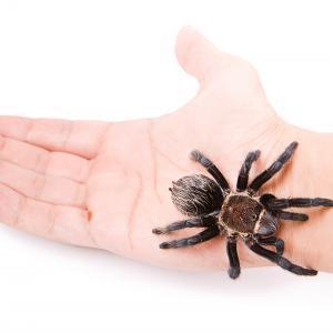 Паяците като домашни любимци: предимства и недостатъци