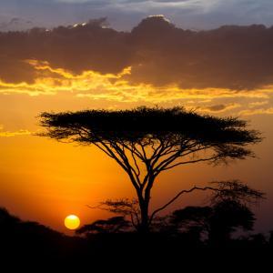 Докоснете се до дивата природа на Африка