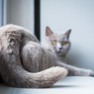 Защо котките обичат да си размахват опашката под носа ви
