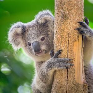 Тест: Познавате ли рекордите в животинския свят?
