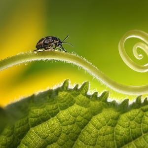 Имат ли насекомите съзнание?