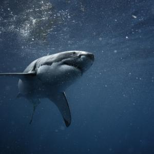 Материал за хидрокостюми предпазва срещу ухапвания от акули