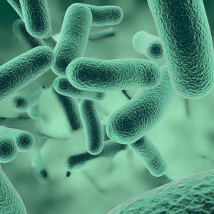 Бактериите могат да комуникират електрически