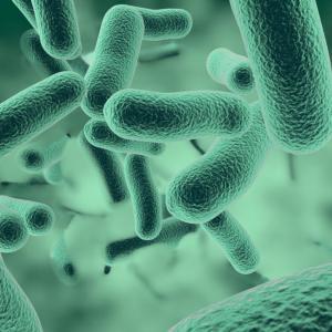 Бактериите имат и обоняние
