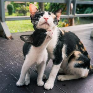 15 сладки котета и техните мини копия