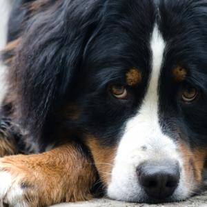 Защо понякога кучетата чакат с години край гробовете на собствениците си?