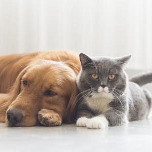 Как кучетата и котките си говорят за хората