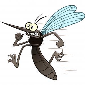 В Исландия няма комари, освен един, и то в буркан