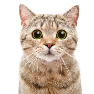 11 любопитни факта за котките