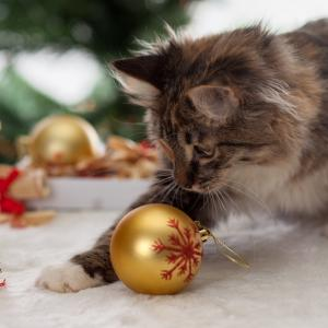 Коледни празници с котка – за какво трябва да внимаваме