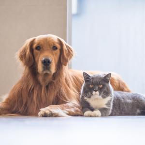 Как да помогнете на кучето и котката да съжителстват в мир и разбирателство