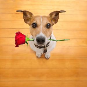 """Как кучето ви казва: """"Обичам те!"""""""