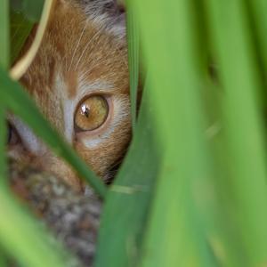 Видео тест: Открийте скритите животни