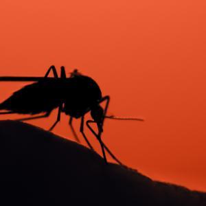 Комари предават ДНК на тези, които хапят