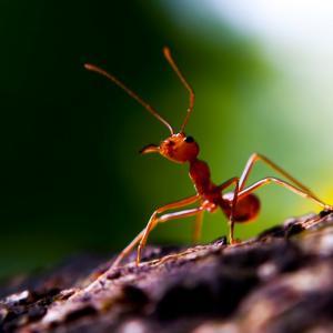 Мравки си имат свой Facebook